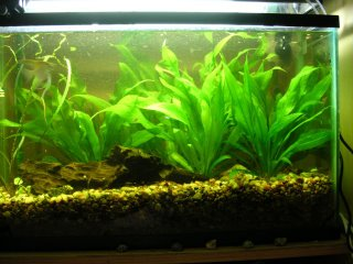 After - a little better, the tank is merely FULL