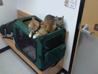 Kitties went to the Vet