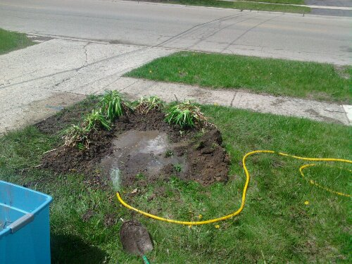 Watering the bed in. See how it forms a dike making a rain garden?